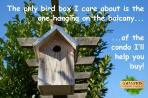 Birdbox condo